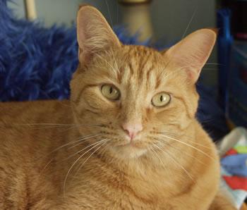 http://blinn.com/cats/images/2002_tanerineonblue.jpg